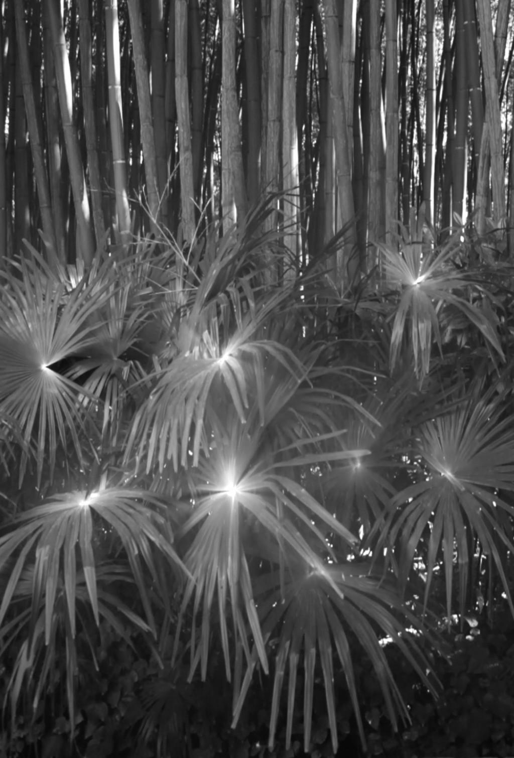 Bamboo stars